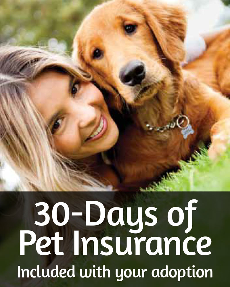 pet-finder-free-30-day-insurance-for-adopters